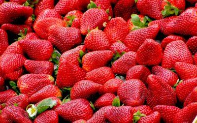 Tour a fraisier : Comment fabriquer une tour à fraisier ?