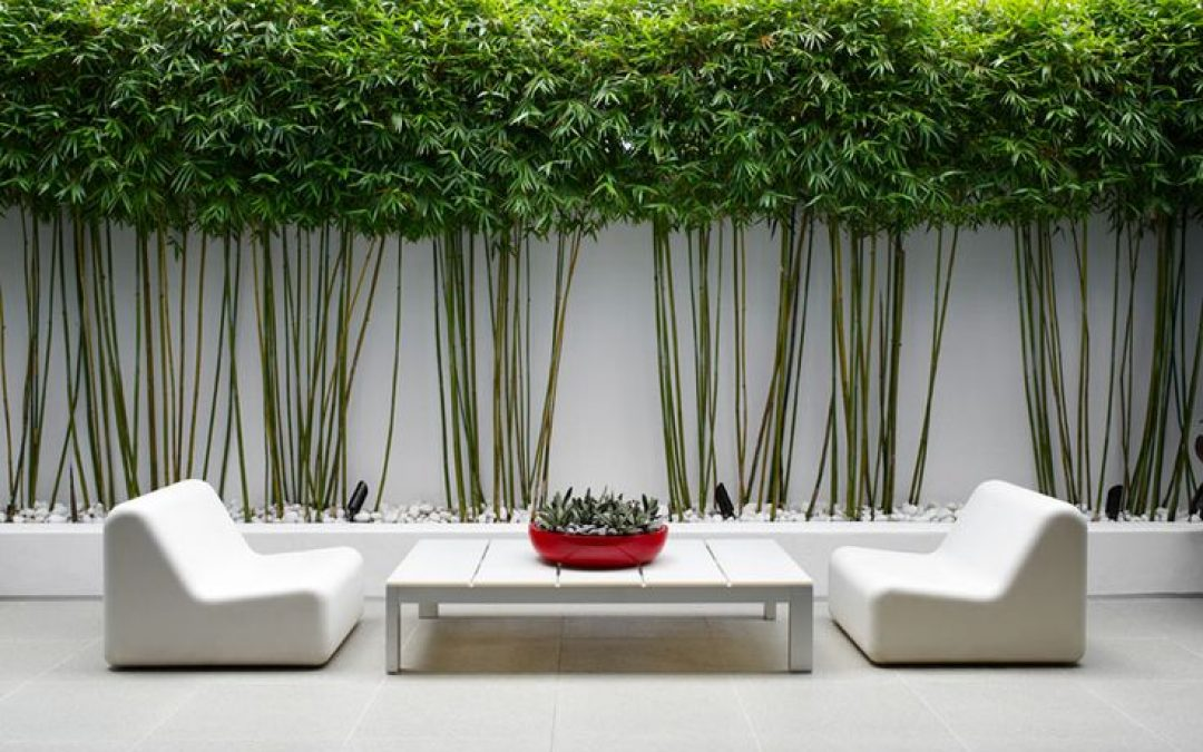 extérieur-zen-bambou